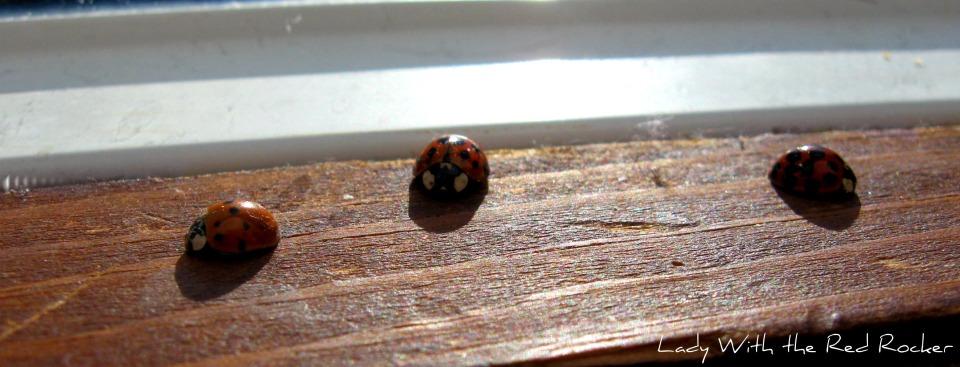 Ladybugs 4